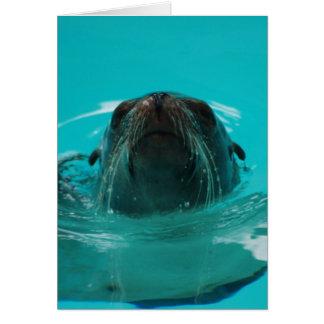"""California Sea Lion"" Greeting Card"