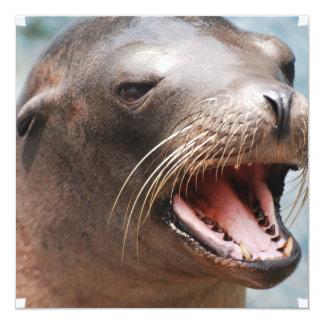 """California Sea Lion Invitations 5.25"""" Square Invitation Card"""