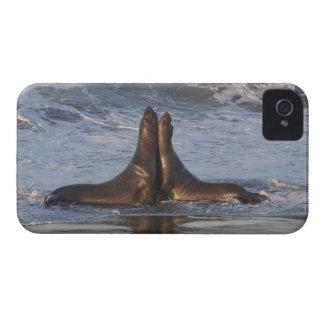 California Sea Lion iPhone 4 Case-Mate Case