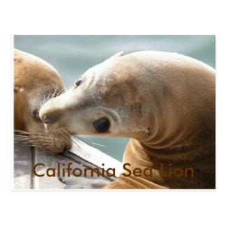 California Sea Lion Post Card
