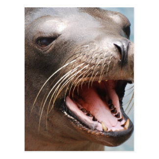 California Sea Lion Postcard