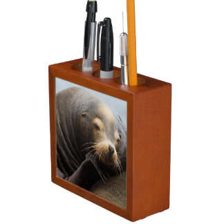 California Sea Lion Resting Desk Organiser