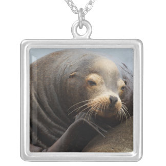 California Sea Lion Resting Silver Plated Necklace
