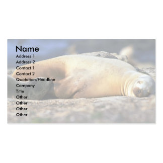 California Sea Lion Sleeping Double-Sided Standard Business Cards (Pack Of 100)