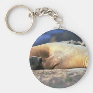 California Sea Lion Sleeping Key Chains