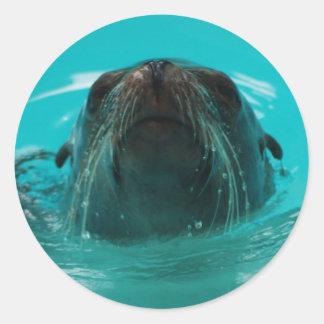 California Sea Lion Sticker