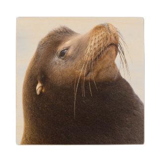 California Sea Lion Wood Coaster