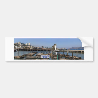 California Sea Lions Bumper Sticker
