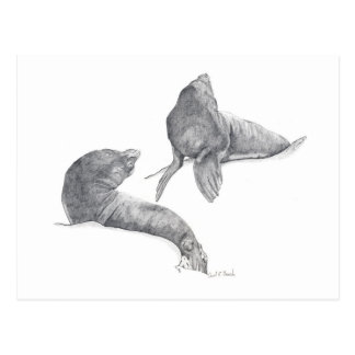 California Sea Lions Postcards
