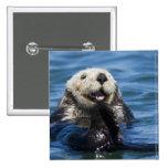 California Sea Otter Enhydra lutris) grooms 15 Cm Square Badge