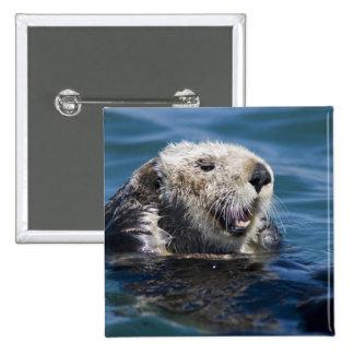 California Sea Otter Enhydra lutris) grooms 2 15 Cm Square Badge