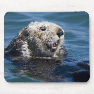 California Sea Otter Enhydra lutris) grooms 2 Mouse Mat