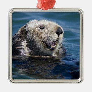 California Sea Otter Enhydra lutris) grooms 2 Silver-Colored Square Decoration