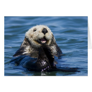 California Sea Otter Enhydra lutris) grooms Card