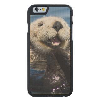 California Sea Otter Enhydra lutris) grooms Carved® Maple iPhone 6 Slim Case