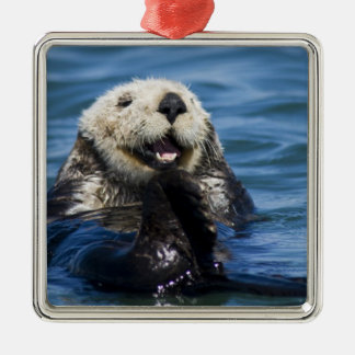 California Sea Otter Enhydra lutris) grooms Christmas Ornament