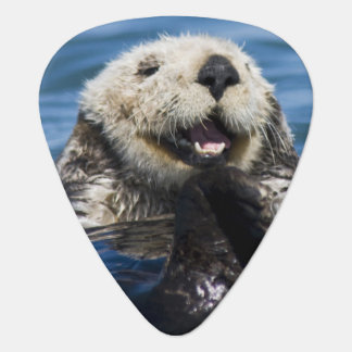 California Sea Otter Enhydra lutris) grooms Guitar Pick