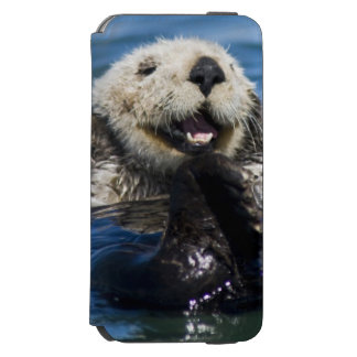 California Sea Otter Enhydra lutris) grooms Incipio Watson™ iPhone 6 Wallet Case