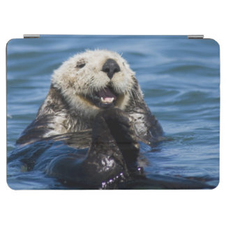 California Sea Otter Enhydra lutris) grooms iPad Air Cover