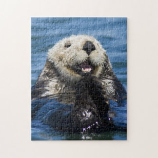 California Sea Otter Enhydra lutris) grooms Jigsaw Puzzle
