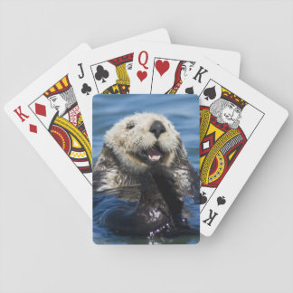 California Sea Otter Enhydra lutris) grooms Playing Cards