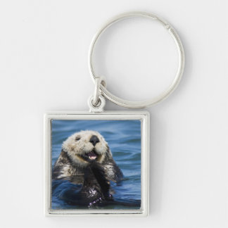 California Sea Otter Enhydra lutris) grooms Silver-Colored Square Key Ring