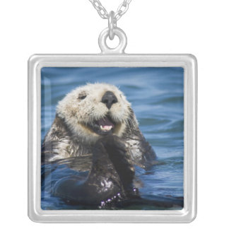 California Sea Otter Enhydra lutris) grooms Silver Plated Necklace