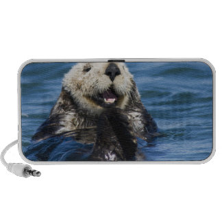 California Sea Otter Enhydra lutris) grooms PC Speakers