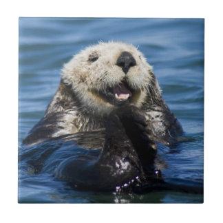 California Sea Otter Enhydra lutris) grooms Tile