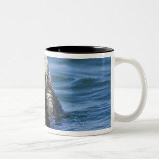 California Sea Otter Enhydra lutris) grooms Two-Tone Coffee Mug