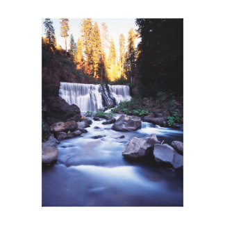 California, Shasta-Trinity National Forest Canvas Print