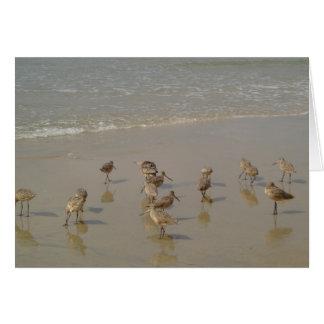 California Shore Birds Card