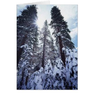 California, Sierra Nevada Mountains 9 Card