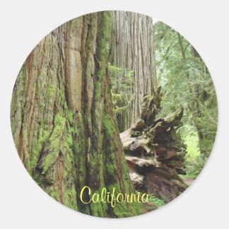 California Stickers Big Coastal Redwood Trees