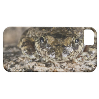 California tree frog,(Pseudacris cadaverina), Barely There iPhone 5 Case