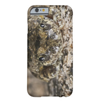 California tree frog,(Pseudacris cadaverina), Barely There iPhone 6 Case