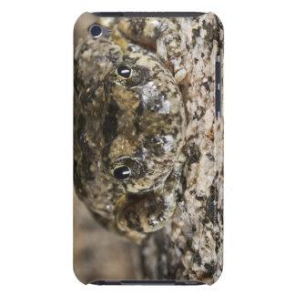 California tree frog,(Pseudacris cadaverina), iPod Touch Case