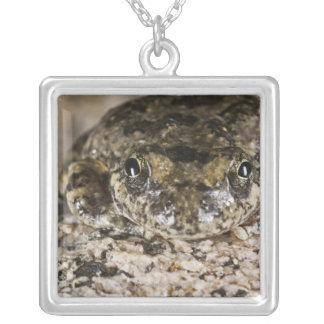 California tree frog,(Pseudacris cadaverina), Custom Jewelry