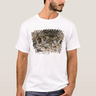 California tree frog,(Pseudacris cadaverina), T-Shirt