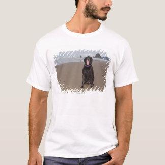 California, USA T-Shirt