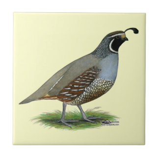 California Valley Quail Tile