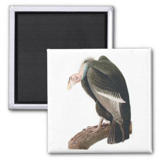 California Vulture (Condor), Audubon Fine Art Square Magnet
