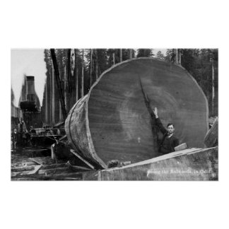 CaliforniaMan Posing by Cut Redwood Log Poster