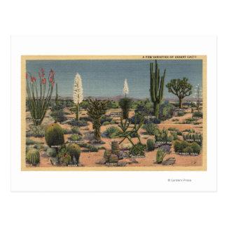 CaliforniaVarieties of Desert Cacti Postcard
