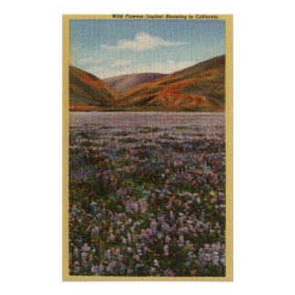 CaliforniaWild Lupine Flowers in Bloom Posters