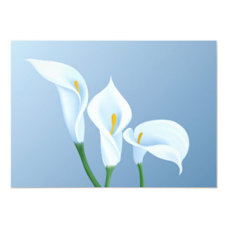 Calla flowers card