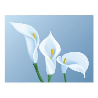 Calla flowers postcard