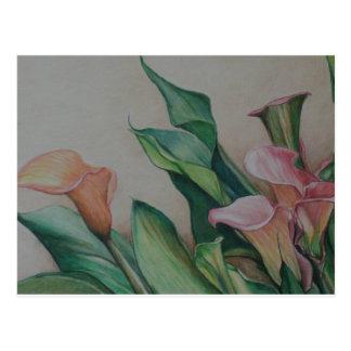 Calla Lilies art Postcard