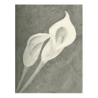 Calla Lilies Postcard