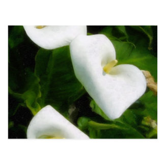 Calla Lily 9 Watercolor Post Cards